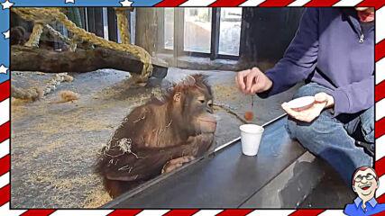 Маймуна реагира на фокус - Смях