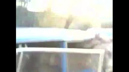 Роми тъпчат магаре в Лада