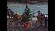Коледните празненства започнаха за животните в Лондонската зоологическа градина