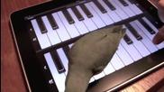 Животни играят игри на тъч скрийн