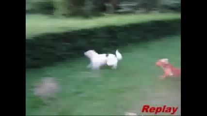 Куче не успява да прескочи храст и се забива в него