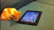 Котка играе на ipad (2-ра част)