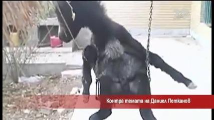 Контра темата на репортера Даниел Петканов - Часът на Милен Цветков (24.09.2014г.)