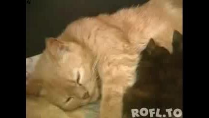 Котка Се Грижи За Бебета Зайчета
