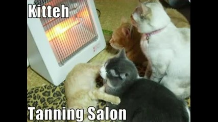 Very Funny Cats