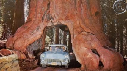 5 умопомрачителни дървета, за които няма да повярвате, че съществуват!