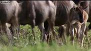 Лoвно поле на всеки хищник в Африка
