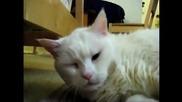Сладки котета пищят кат луди..;д
