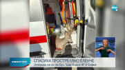 Спасиха прострелян сръндак от столичен булевард