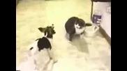 Котка и Куче се бият! - Много Смях
