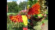Цветочная прогулка -floral walk