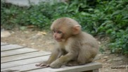 15 маймуни - детска песничка