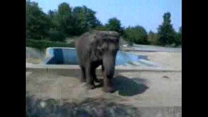 Слон Се Къпе С Пясък