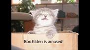 Много смешни котки 3