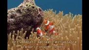 Bogatstvoto Na Koralovite Rifove