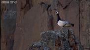 Пиленце прави скока на живота си, за да се озове при родителите си