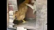 Куче Брутaлнo Изнасили Кокошка! * Смях