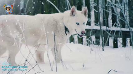 Владимир Песня - Зима