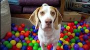 Най-добрата изненада за рождения ден на куче