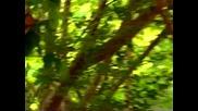 Маймунка се бъзика с тигърчета
