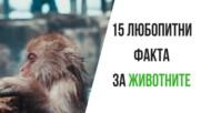 15 любопитни факта за животните