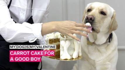С кучето на празника на любовта. Зарадвайте го за Свети Валентин!