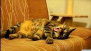 Коте на терапия с прахосмукачка