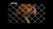 Sule Gulec - Canimi Alda Git