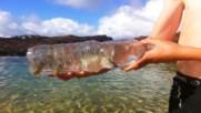 Капани за риба - направи само за 60 секунди