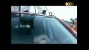 Най-Лудата Каскада С Куче!!!(нереално яко)