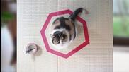Как да затворим котка в кръг ?