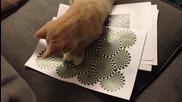 Котенце се опитва да разбере оптична илюзия