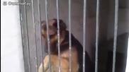 Куче подивява заради играчката си