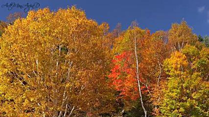 Autumn's Echo - David Garrett