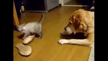 Смело коте се бъзика с куче ;д