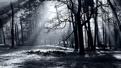 Insomnium -twilight Trails