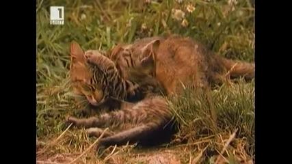 Патилата на Спас и Нели - ( Български Игрален Филм 1987)