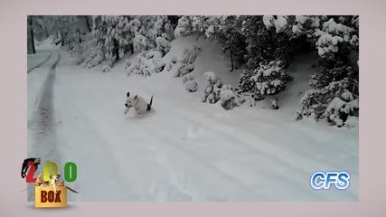 Кучета и котки си лудуват в снега! Забава до забрава!!!