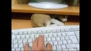 Супер коте,  което си търси играчка на клавиатурата!