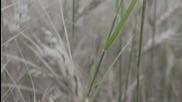 Силата на зърното - Зеленият отбор - Canon 550d