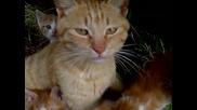 Котка и нейните Котенцата