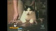 Забавни котенца- МЕГА ДОБРО