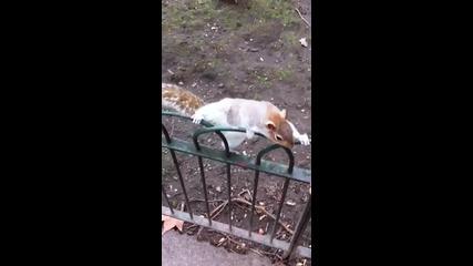 Saint James Park Squirrel
