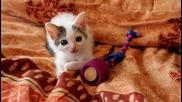 Бети - най-сладкото коте