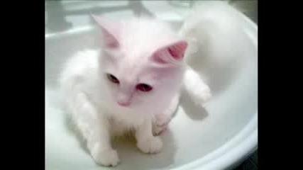 еее тва е лудата ми котка :D {КеТи}