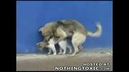 Куче Бърка Партньора