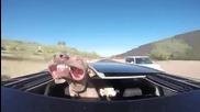 Куче се подава от покрива на кола при висока скорост