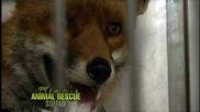 Зооспасители (Animal Rescue Squad) S02E08