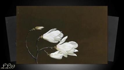 Paul Mauriat - O floare este tot ce ai nevoie