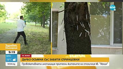 """Забити спринцовки в дърво притесниха жителите на """"Люлин"""""""